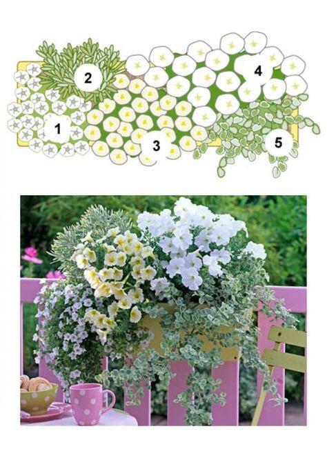 Blumenkasten mit Zauberglöckche, Mittelmeer-Wolfsmilch, Hängepetuninien und Lakritzkraut