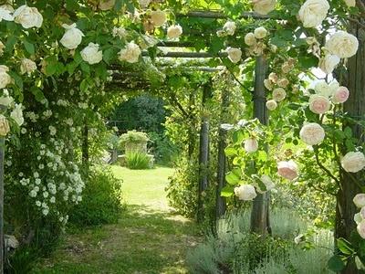 roses: White Rose, Side Yard, Climbing Rose, Climbing Flower, Gardens Gates, Rose Trellis, Arbors Color Rose, Beautiful Rose, Gardens Pathways