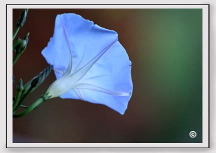 En el estudio podemos crear fondos neutros, coloridos, blancos o negros, pero estos deben estar los suficientemente alejados de la flor para que no salga ninguna imperfección en la fotografía.