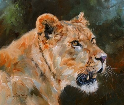 Lioness Superb David Stribbling Oil Painting | eBay
