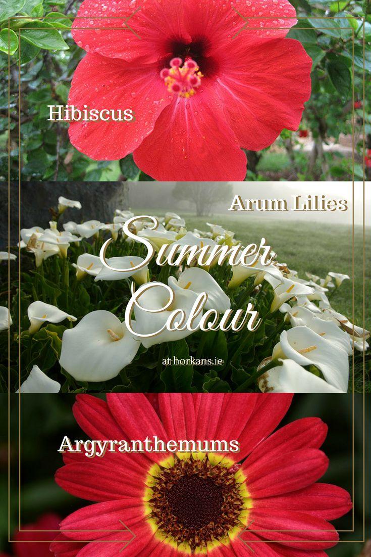 11 best Perennials images on Pinterest | Beautiful flowers, Texas ...