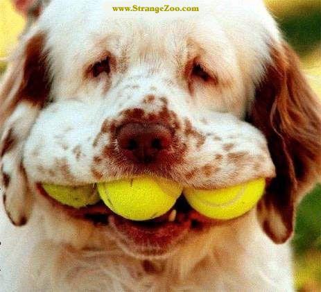 Doggie tennis player