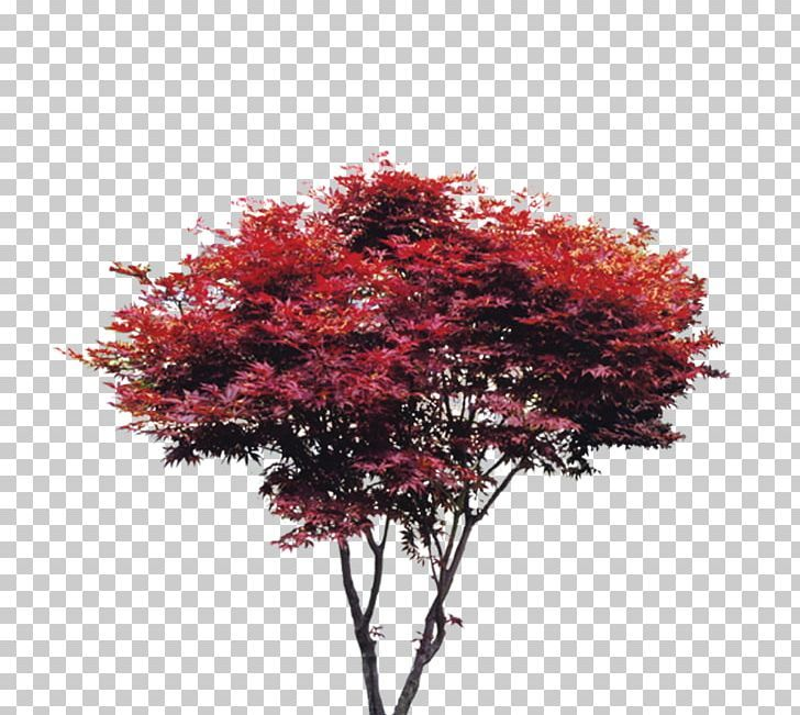Pin By Roma Brito On Vegetacao Png Tree Tree Textures