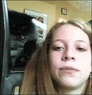 Watch out, he's there…gif this may be the funniest cat GIF I have ever seen, ever. I want him.