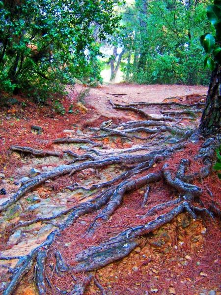 Natural stairs in a park in Athens