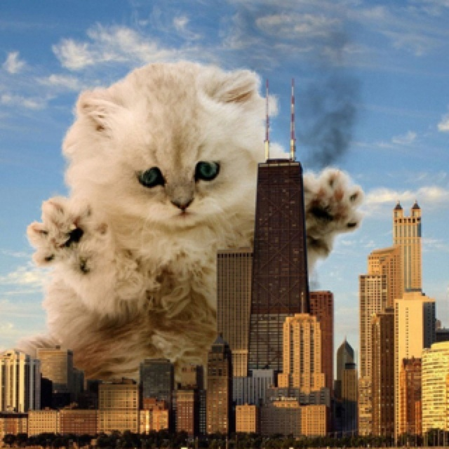 giant kittens + Chicago = awesome Cat lady faves
