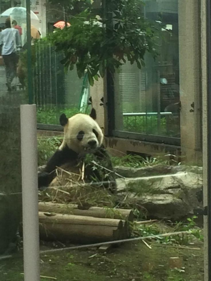 Best 20+ Ueno zoo ideas on Pinterest  Zoo architecture, Architecture graphic...