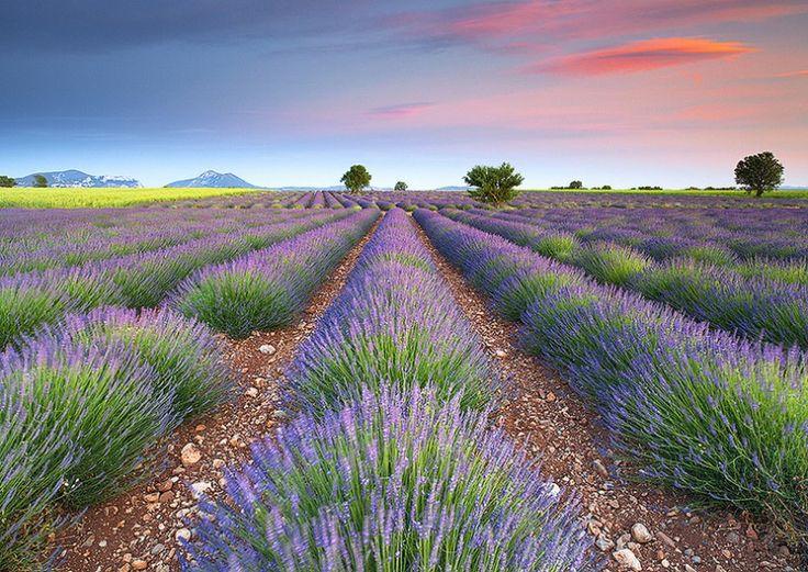 Plateau de Valensole – Provence, France