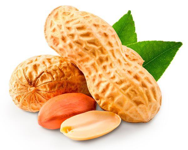 Ótima fonte de proteína, fibras e ácidos graxos monoinsaturados e muito mais.