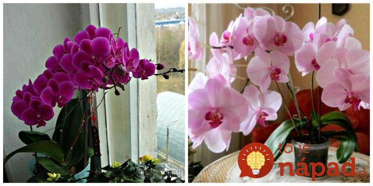 Moja kamarátka ma upodozrieva, že moja orchidea kvitne už tak dlho, že musí byť umelá!