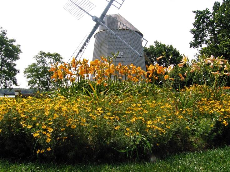 Windmill Cape Cod Part - 25: Windmill In Bloom, Orleans, Cape Cod.
