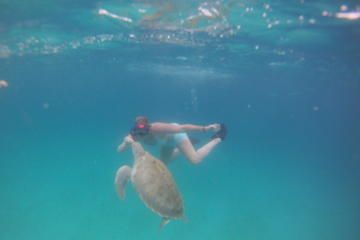 Share the thrill of swimming with sea turtles on this Private Turtle Swim Tour in Barbados.