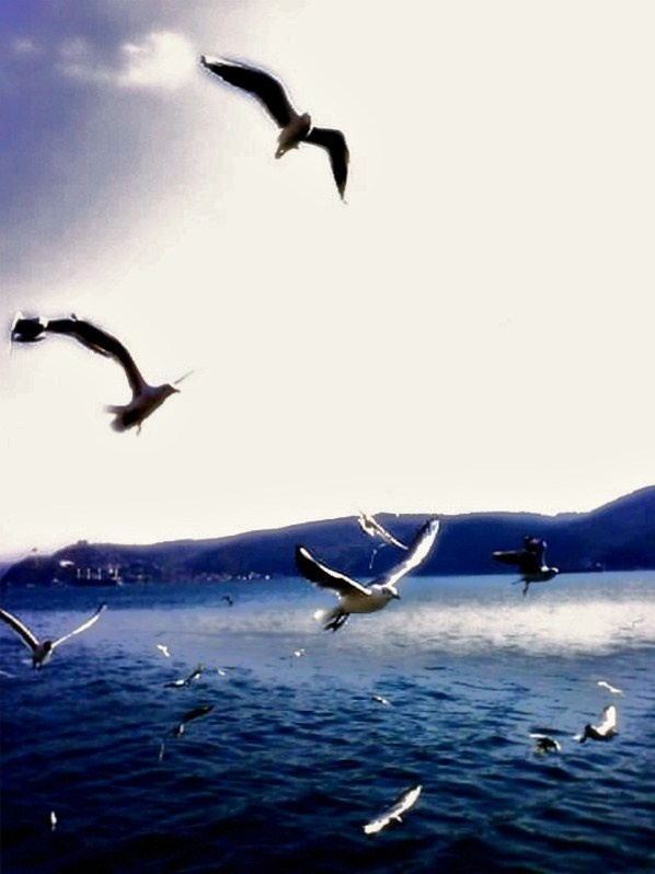 blue #photography #istanbul