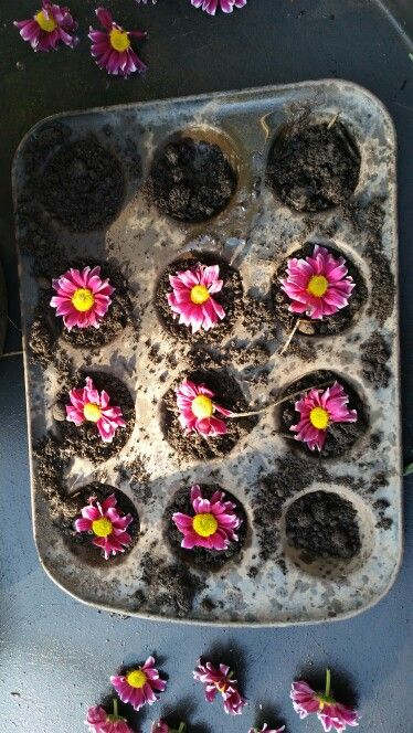 One flower for each mud pie at Chadwell Pre-school