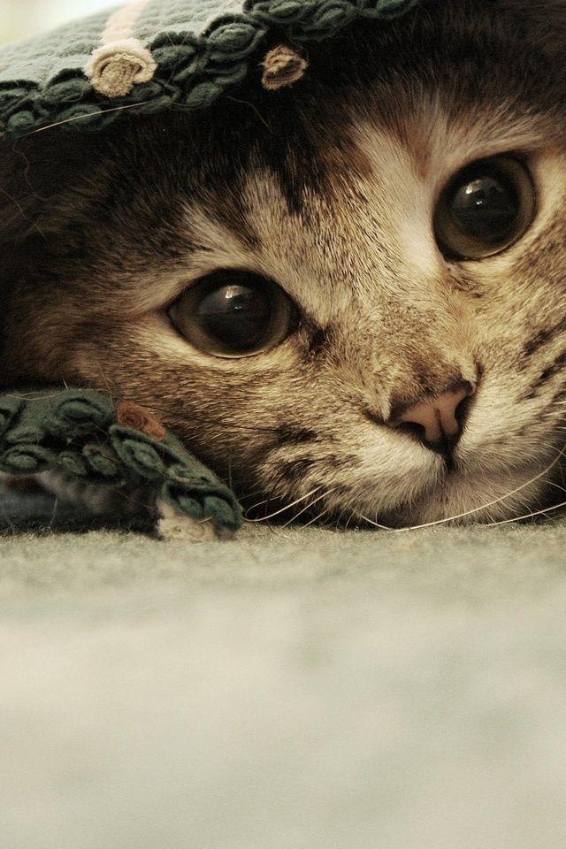 #kittens