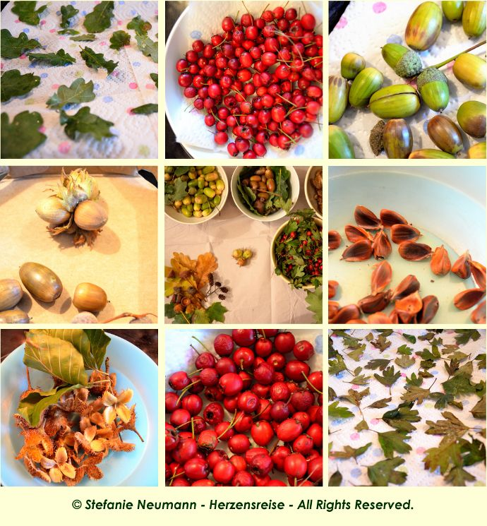 ABOUT #AUTUMN - A #WALK & A #RECIPE: The day after tomorrow is #Mabon, the #AutumnEquinox, which in the Celtic calendar marks the high-time of this season. As Kim and I are both children of Autumn, this is always a special time of year for us. Also, there is still much to discover in Nature, which may also be found on the plate of one or another meal, later. | #HeartsJourney