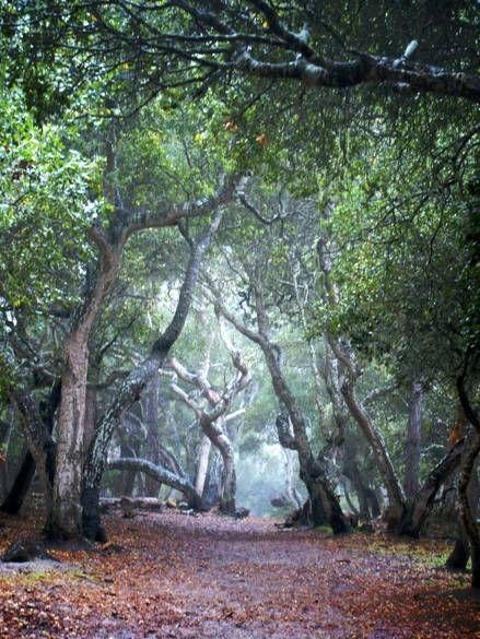 Pacific Grove, CA - Rip Van Winkle park
