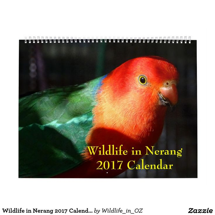 Wildlife in Nerang 2017 Calendar - Australian Wildlife. Click on photo to view item then click on item to see how to purchase that item. #wildlife #parrot #kingparrot #calendar