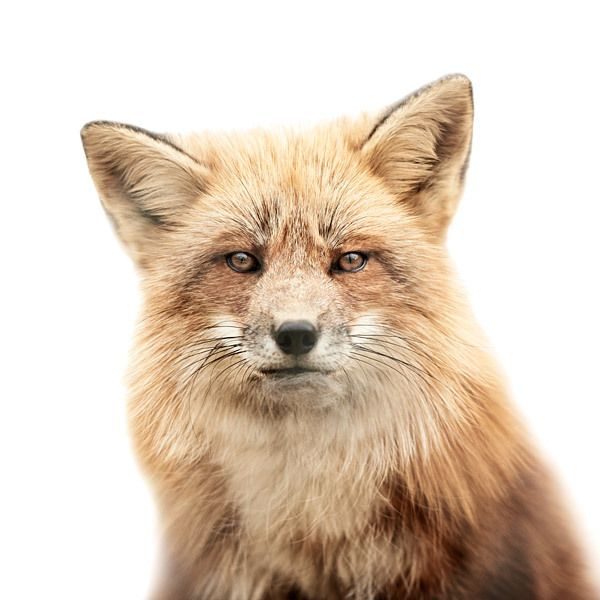 More Up Close and Personal Animal Portraits - Morten Koldby
