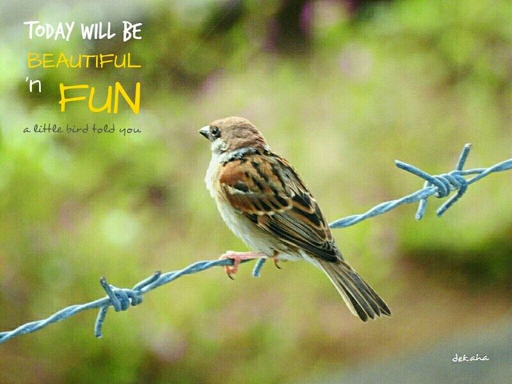 """""""Today will be beautiful and fun"""" a little bird told you #dekaha"""