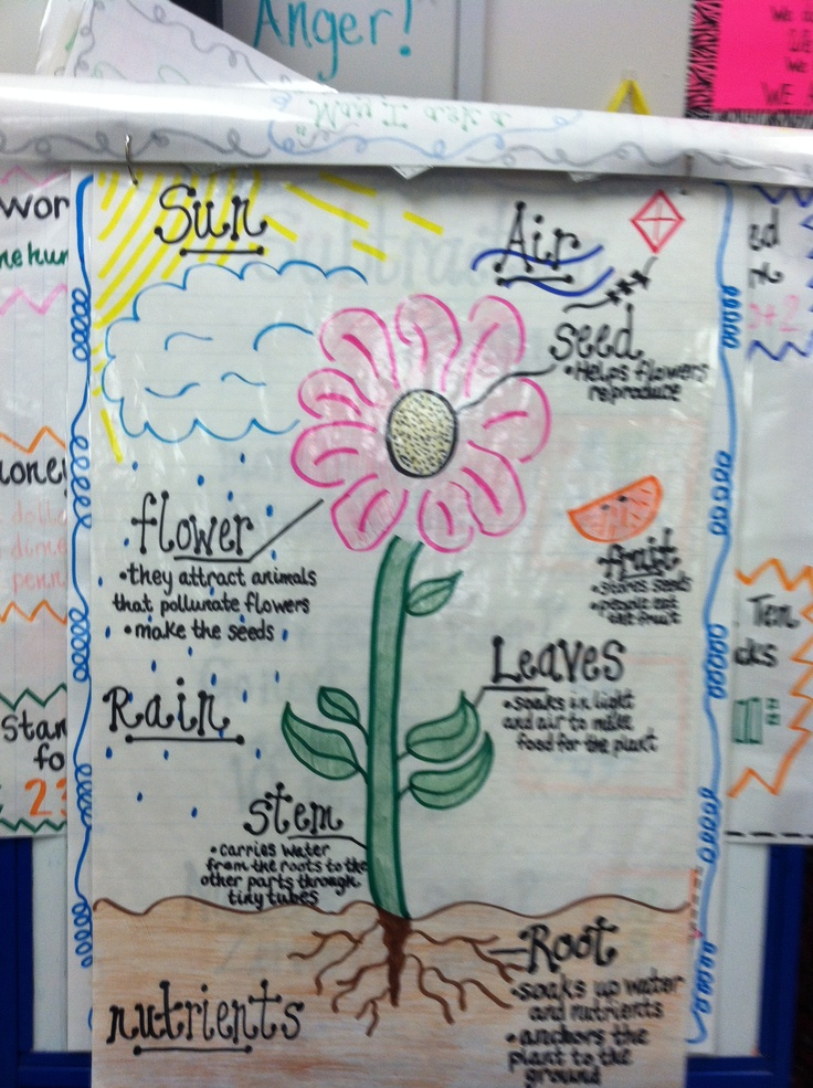 plant life cycle anchor chart more science plants l7 plants plant life ...