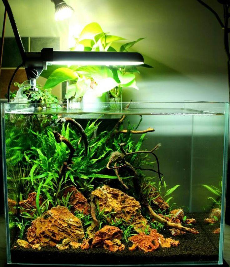 Maple leaf rock #TropicalFishAquariumIdeas