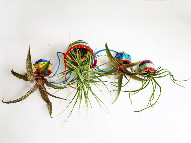Recycled ghost net baskets and airplant display