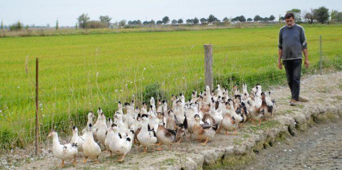 Gard : De ferme en ferme à la rencontre des agriculteurs et du terroir