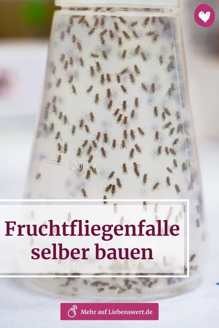 Fruchtfliegen Sind Ziemlich Lastige Plagegeister Mit Dieser Fruchtfliegenfalle Kannst Du Die Ganze Schar Auf Einmal Beseitigen Hie Food Condiments Life Hacks