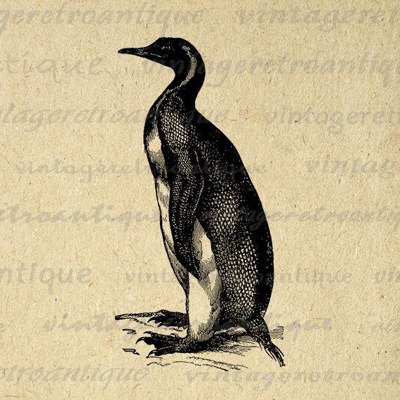 Printable Image Pelican Bird Digital by VintageRetroAntique
