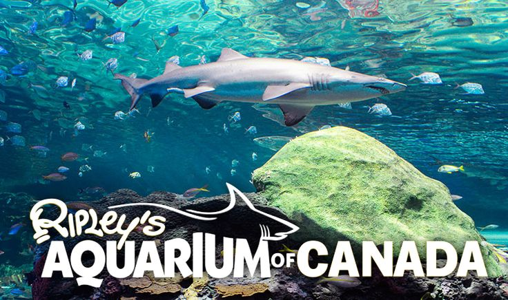 Buy Online and skip the line! Enjoy a full day at Toronto's home of 16,000 beautiful animals at Ripley's Aquarium of Canada. Get Online Tickets and Save!