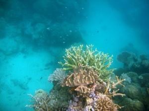 Imagenes con cámara submarina de una inmersión de snorkling en la Gran Barrera de Coral de Australia durante la Vuelta al Mundo de dos españoles que narra el blog spainnomads.com