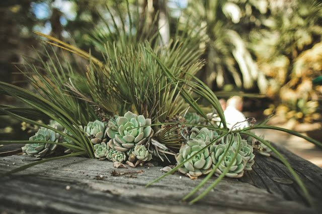 pin parasol plantes grasses dans un support bois une composition estivale