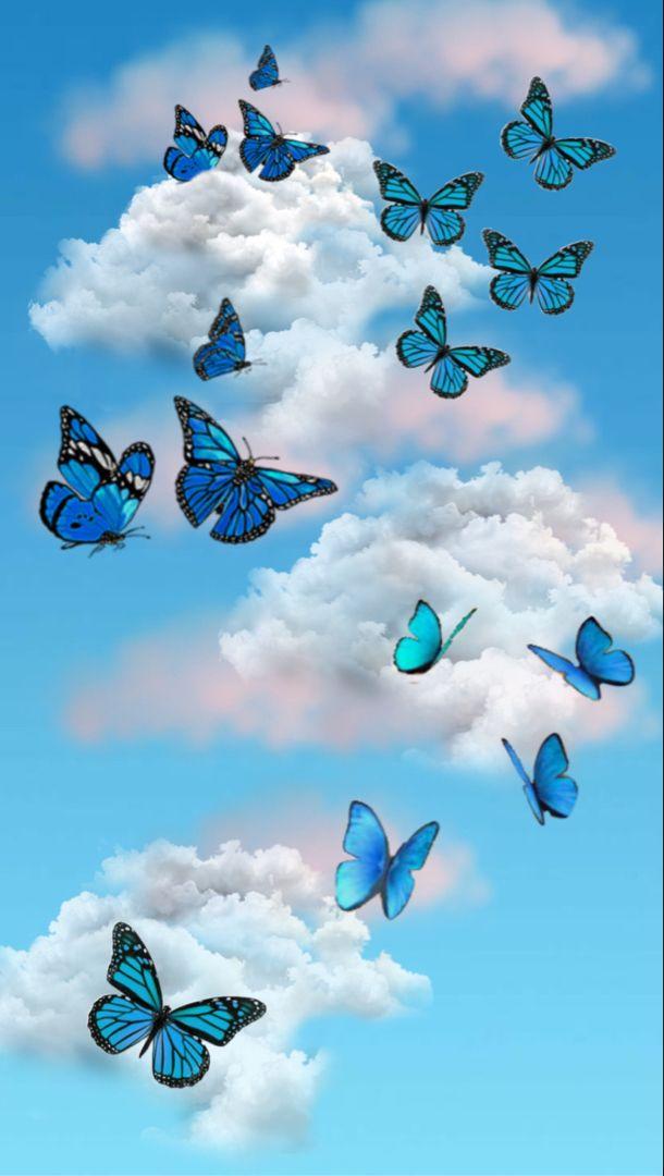 Blue Butterfly Wallpaper In 2021 Blue Butterfly Wallpaper Butterfly Wallpaper Backgrounds Butterfly Wallpaper Blue butterfly wallpaper aesthetic