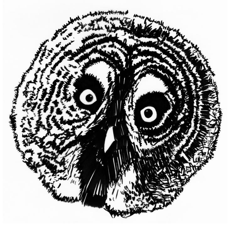 Owl by Michaela Huml