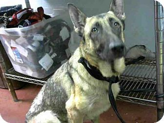 6/20/16 ■■■ACT QUICKLY OUT OF TIME PLEASE SHARE NOW IT SAVES LIVES ■■■Atlanta, GA - German Shepherd Dog. Meet FABLE, a dog for adoption. http://www.adoptapet.com/pet/15858171-atlanta-georgia-german-shepherd-dog
