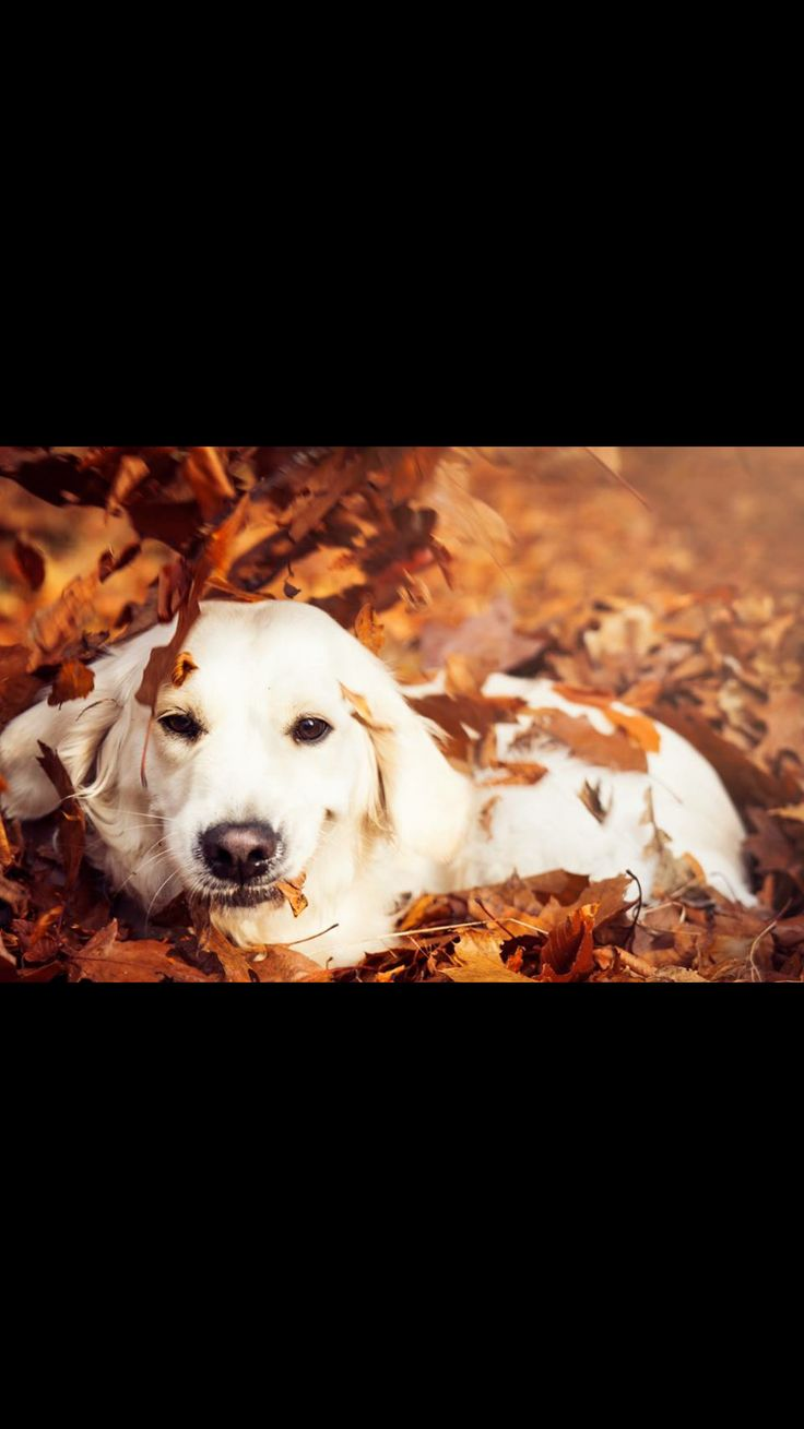 #dog #outside #fall #colors #leaves