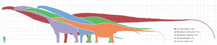 Argentinosaurus - Wikipedia, the free encyclopedia