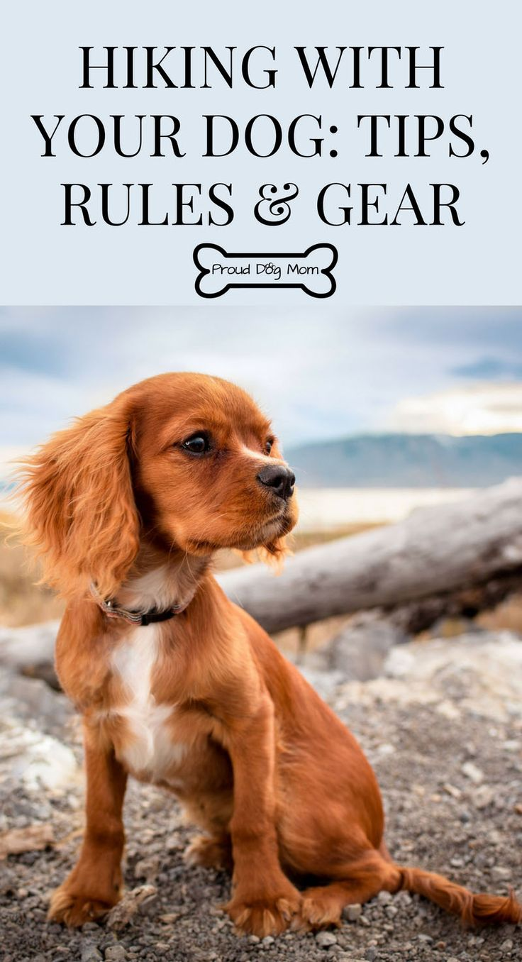 Hiking With Your Dog: Tips, Rules, and Gear   Hiking Gear   Dog Safety Tips  
