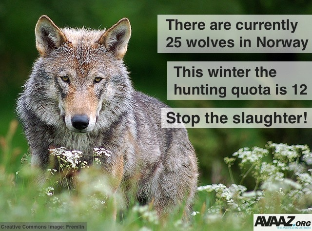 superdry sale clothing uk Stop the wolves  39  slaughter in Norway  http   en avaaz org 1191 norway is killing its green credentials utm_source facebook_avaaz_medium social_media_campaign animal rights   SeaShepherd  defendconserveprotect