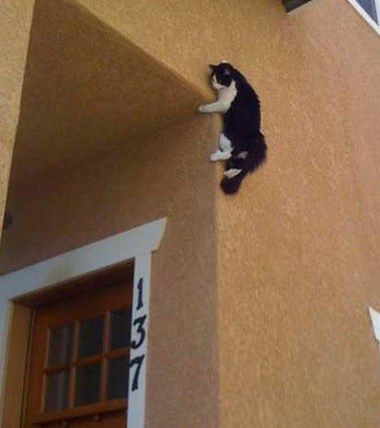 Ninja cat......The World's Top 10 Best Images of Creepy Cats