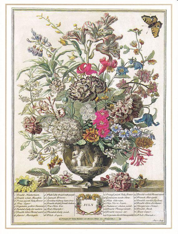 July vintage botanical art print Winterthurs 12 months of