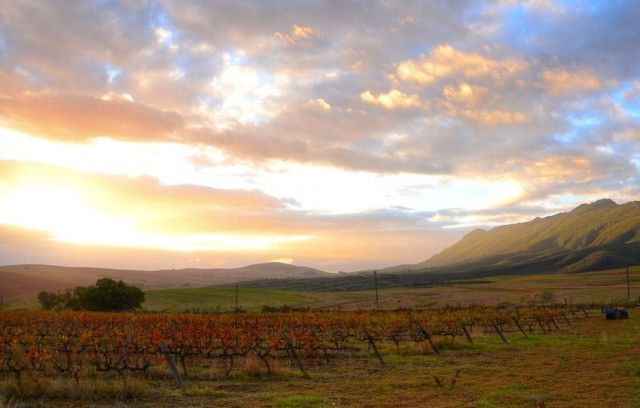 Swartland Winery in South Africa