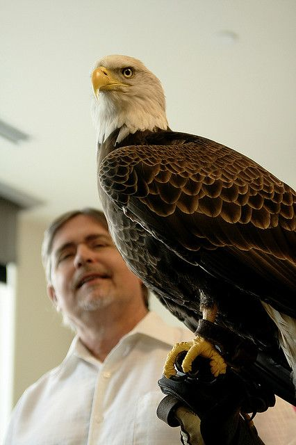 Challenger the Bald Eagle visits the united states mint.     nice Challengerman3navyu30 photo found on the web