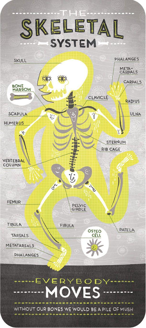 skeletal-system--by-rachel-ignotofsky