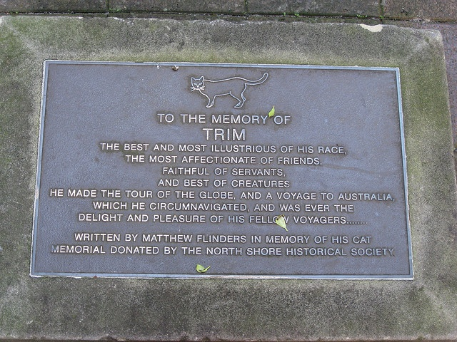 Trim the Cat by brewbooks, via Flickr.  Plaque to the memory of Trim, next to the statue of Matthew Flinders outside the Mitchell Library, State Library of NSW.