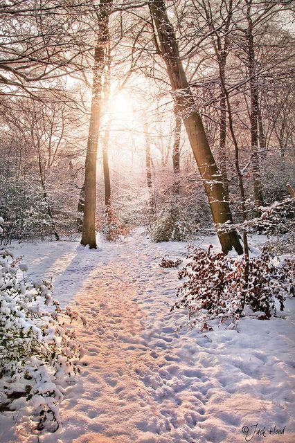 Winter Woodland | Flickr