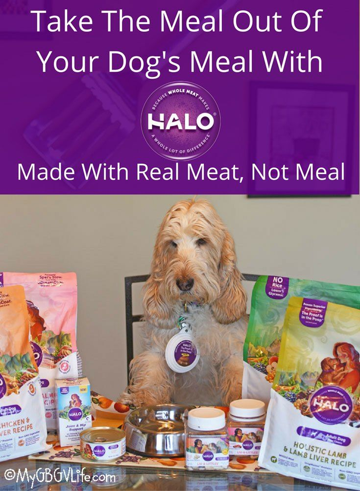 Take The Meat Meal Out Of Your Dog S Meal Why We Re Switching