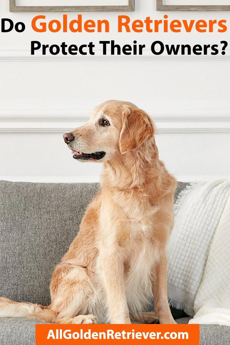 Pin On Dogs Breeds