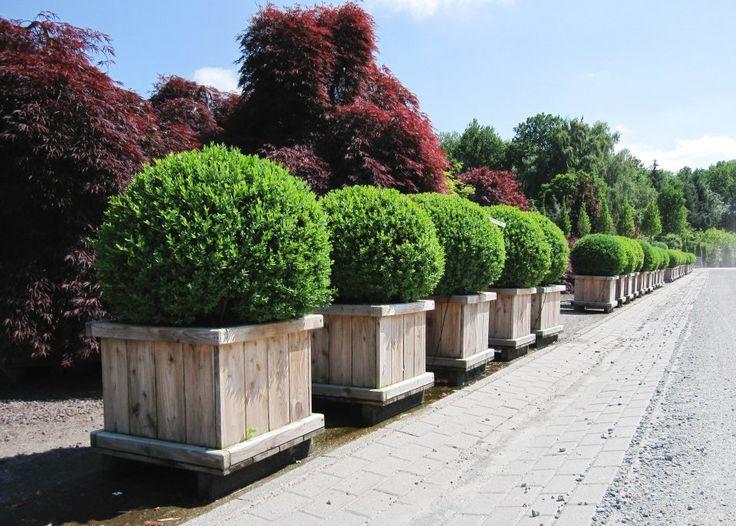 Træer Buske slyngplanter - Træer Buske slyngplanter